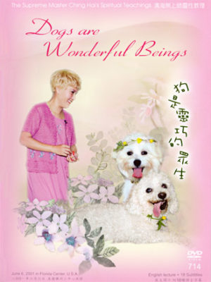 DVD-0714 Dogs Are Wonderful Beings